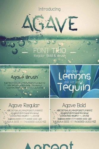 Agave Font Trio